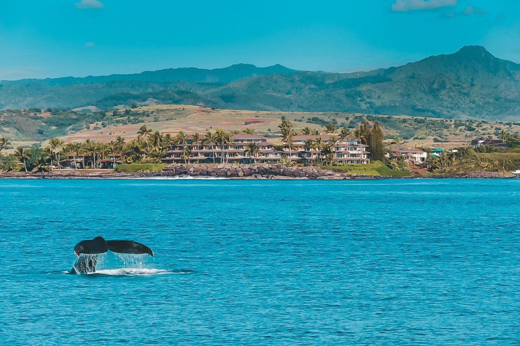 A Week in Kauai: Where to Stay in Kauai - Whalers Cove Resort | Plaid & Paleo